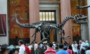 New York Museo Storia Naturale