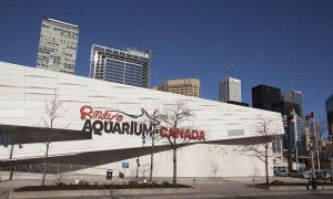Toronto Acquario Ripleys