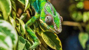 Offerte Vacanza in Madagascar