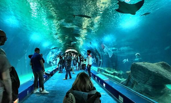 Valencia Museo Oceanografico